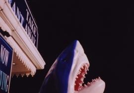 A shark, Brighton Pier