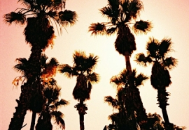 Palm Trees, Plaça Santa Susagna, Girona