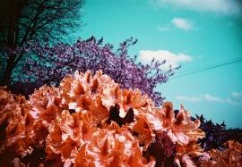 Flowers, Maesycrugiau
