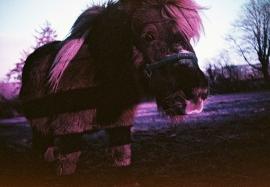 Pony, Llanllwni