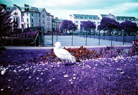 Seagull, Teignmouth