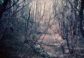 Woods, Maesycrugiau